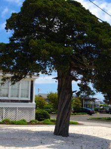 blog - tree