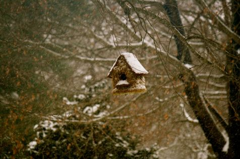 blog- birdhouse pic